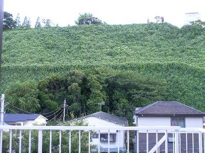 プロスペアー石川町